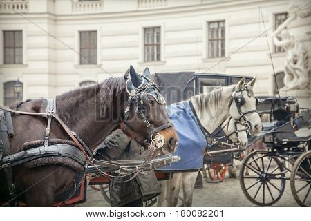 Horses and carriage, Vienna, Austria