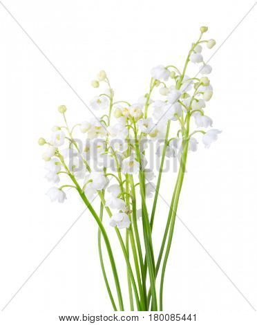 A bouquet  of Lilies of the Valley isolated on white background.