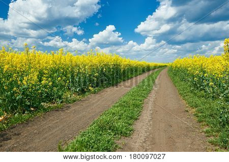 Ground road in yellow flower field, beautiful spring landscape, bright sunny day, rapeseed