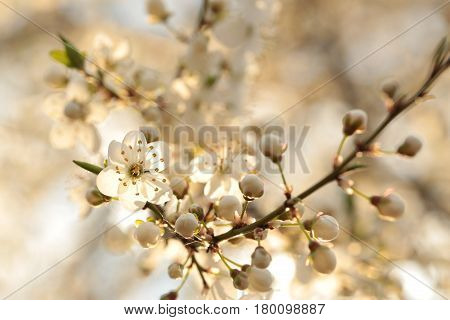Spring flowers blooming on a branch of tree.