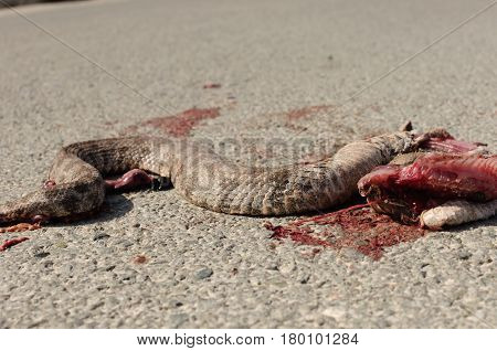 dead snake with beautiful pattern killed snake