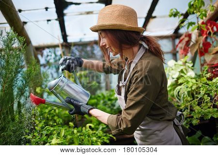 Side view portrait of pretty young woman wearing straw hat enjoying working in tree nursery garden, watering plants using metal can and smiling