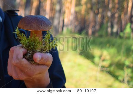 Large wild boletus mushroom with green moss in hand in Siberian taiga forest.