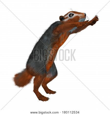 3D rendering of a red bush squirrel isolated on white background