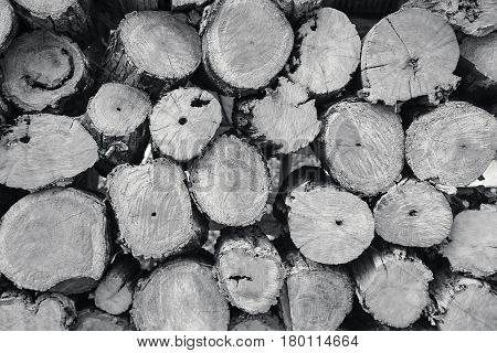 Background of firewood stacked in the cut wood timber firewood textured for background