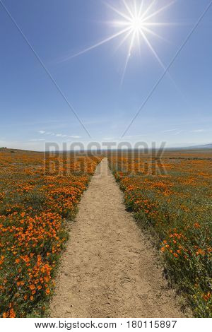Hiking path at the Antelope Valley California Poppy Reserve State Park.