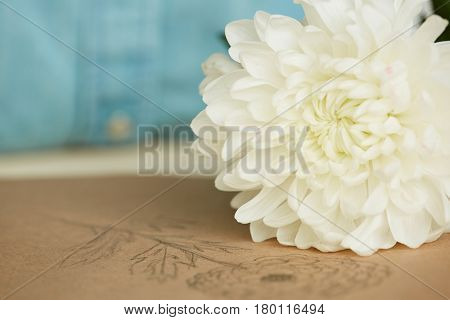 Close-up shot of fresh white chrysanthemum and sketchbook with depiction of flower lying on table, blurred background