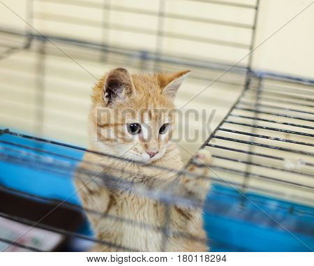Stray red kitten in a shelter. Homeless ginger kitten in a cage. Homeless animals.