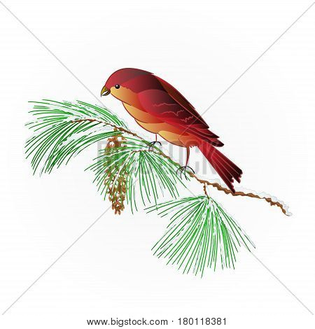 Bird Crossbill on a snowy pine branch and pine cone