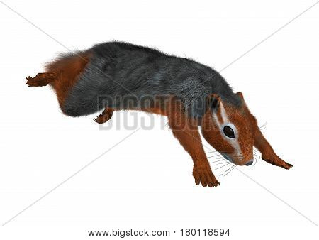 3D rendering of a red bush squirrel or red-bellied coast squirrel isolated on white background