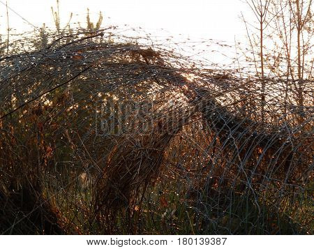 Wire Or Fence Wet With A Morning Dew