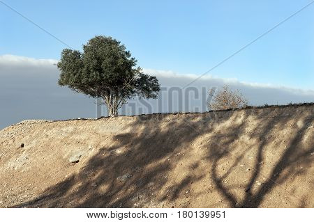 landscape with green tree and yellow bush on the mound with shadows against blue and gray sky