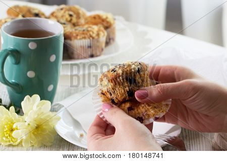 Closeup female hands and cup cake with fresh berries. Blueberry muffins with fresh berries. homemade blackberry muffins
