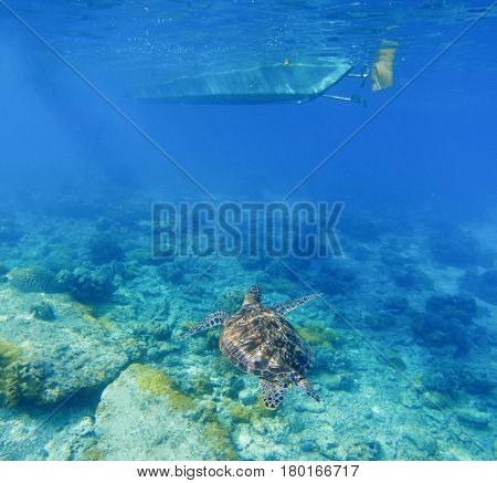 Sea turtle under boat. Wild turtle swims underwater in blue tropical sea. Tortoise undersea photo. Sea turtle in natural environment. Snorkeling in tropic lagoon. Exotic island seashore marine animal
