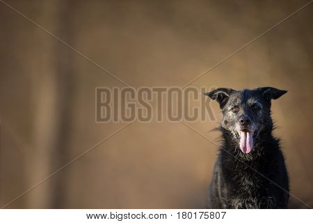 Cute black dog outdoors looking at the camera (with lots of copy space)