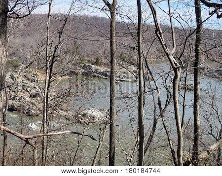 Trees on a coast of the Potomac River near Washington USA March 20 2017