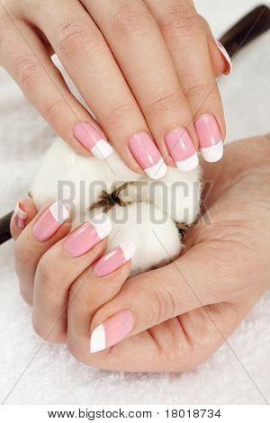 Hands With Cotton Crop