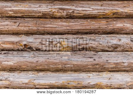 Fragment of the rustic wooden house cracked log wall. Rural house log wall background texture.