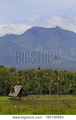 Rice fields with hut in front of forest and mountain. Tropical nature vertical photo. Traditional rice growing in Asian country. Agriculture field. Green grass field image. Exotic island countryside