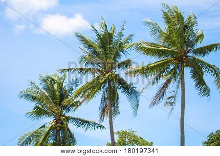 Tropical landscape with palm trees. Palm leaves on sky background. Tropical scene with coco palms. Sunny day in exotic paradise. Summer holiday banner template. Green palm crowns background photo
