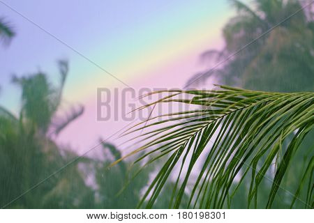 Palm tree leaf on rainbow sky background. Coco palm tree garden. Rainbow toned photo. Tropical island during rain season. Sunlight in water drops. Wet air of tropic nature. Vintage banner template