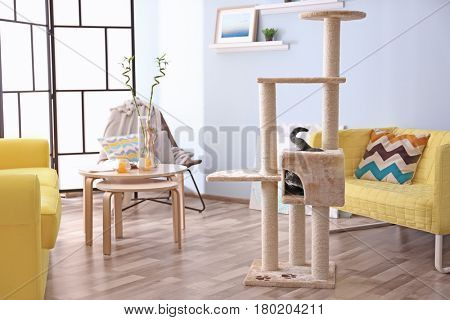 Kitten sitting in cat tree at modern room