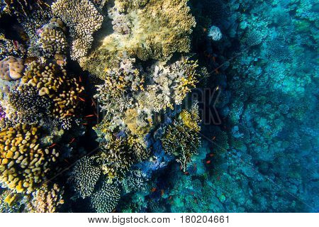 Variety Of Soft And Hard Coral Shapes, Sponges And Branches In The Deep Blue Ocean. Yellow, Pin, Gre