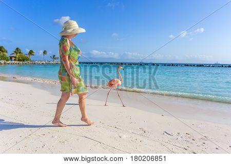 Flamingo on the tropical beach and women posing on background. Flamingo beach, Aruba