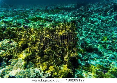 Vibrant Underwater Corall Reaf