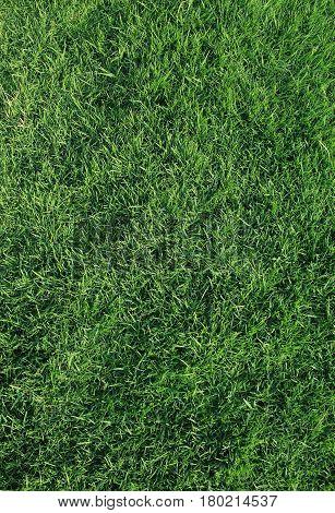 fresh green grass nature background texture, tropical garden