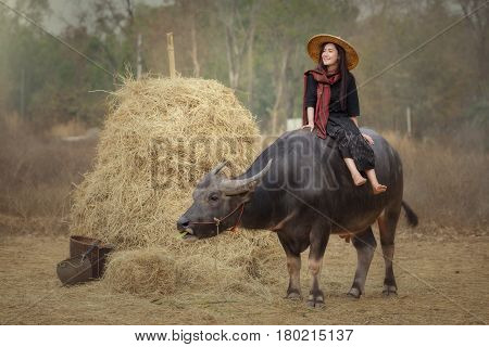Asian Laos women lifestyle in Countryside Thai Esan enjoy with a buffalo in cornfield In Thai Esan traditional dress sitting on the buffalo back at Nong Khai Province Thailand.