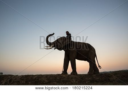 Thailand Mahout man and elephant silhouette on the park sunrise