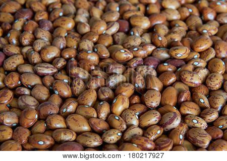 Closeup image ecological pinto beans with a narrow depth of field