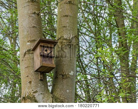 A nest box on a tree in spring