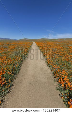 Hiking trail at the Antelope Valley California Poppy Reserve State Park.