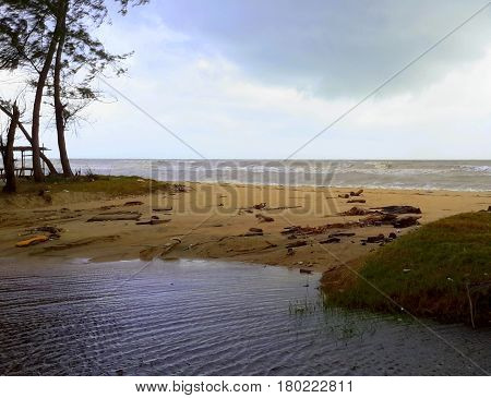pool of water in foreground at beach, with ocean filled with waves seen in background, two trees and shack on left, driftwood on the beach