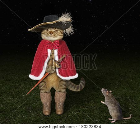 The real cat looks like a gallant musketeer. His friend rat is standing next to him.