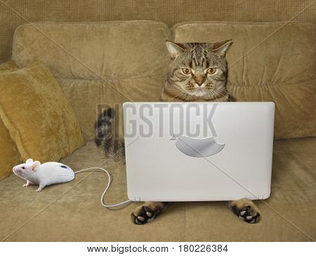 The serious cat is sitting on a sofa and staring at his notebook. There is a white computer mouse next to him. This mouse looks like a real mouse.