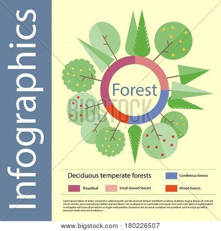Forest. Info-graphics in flat style. Elements design. Vector illustration