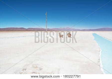 Salinas Grandes and symbols (Flag of Argentina lama and cactus)