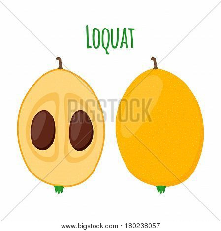 Loquat tropical fruit in cartoon flat style. Exotic tropical nutrition. Healthy food.
