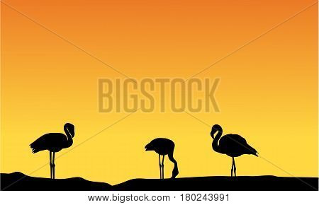 Silhouette flamingo at sunset scenery vector illustration