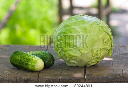 Fresh vegetables (cucumber and cabbage-head) just gathered from the bed.