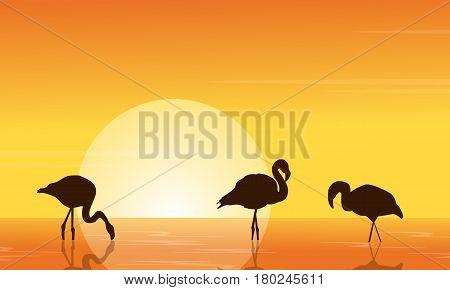 At sunset flamingo on lake scene vector illustration