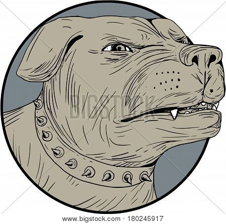 Drawing sketch style illustration of an angry Rottweiler Metzgerhund mastiff-dog guard dog head showing teeth set on isolated white background.