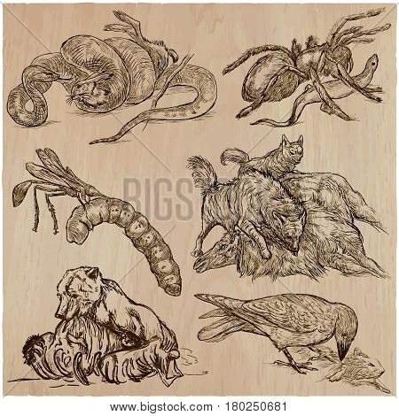 Animals in action around the World - Predators. An hand drawn vector illustrations. Collection set. Easy editable in layers and groups. The colored background is isolated.