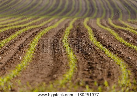Spring Plowed Field Curves