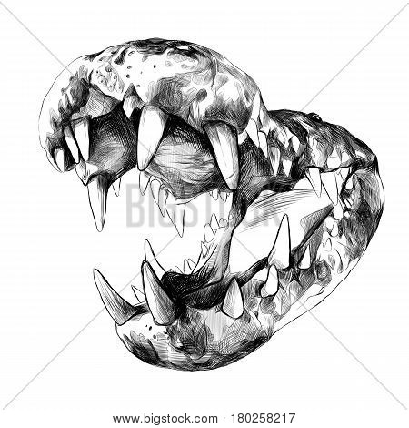 open the jaws of a crocodile with big teeth close up sketch vector graphics black and white drawing