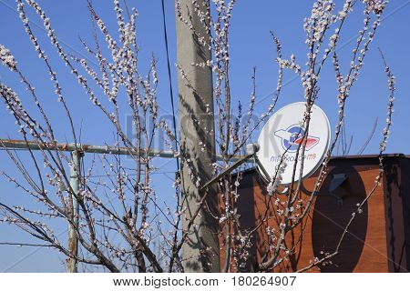 Krasnodar Russia - 04 April 2017: Plate satellite dish satellite tricolor tv. Apricot flowers on the branches.