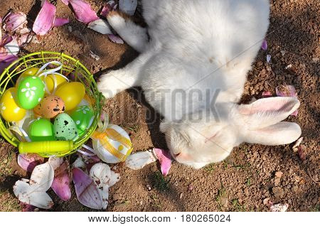 Easter bunny get rest next to a Easter eggs. Rabbit and Easter eggs under the tree